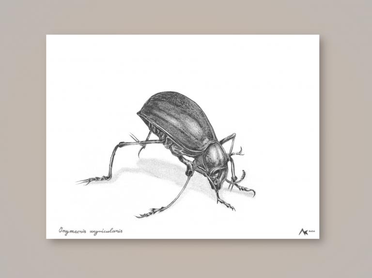 Nebeltrinkerkäfer